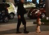 Poodle Forced to Walk on Back Legs During Couple's Shopping Trip in Malaysia