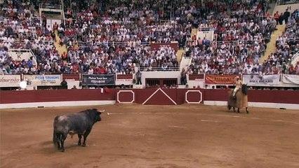Signes du toro - Signes du toro - Férias de Nîmes et Vic Fezensac 2018