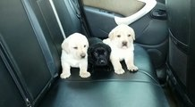 Car ride with these guys? Yes please!