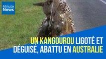 Un kangourou ligoté à une chaise et vêtu d'un imprimé léopard, tué en Australie