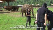 Regardez qui vient embeter sa maitresse en pleine interview... Eléphant trop mignon