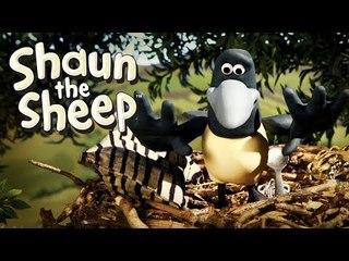 The Magpie - Shaun the Sheep