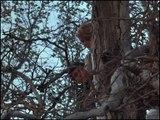 Daktari S01E17 Der Busch brennt (2)