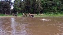 Un éléphant se jette à l'eau pour sauver un homme sur le point de se noyer