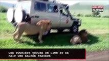 Une touriste touche un lion et se fait une sacrée frayeur (vidéo)