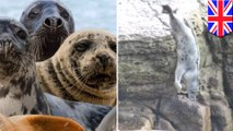Dumb teens throw rocks at seals, forcing them to dive off - TomoNews