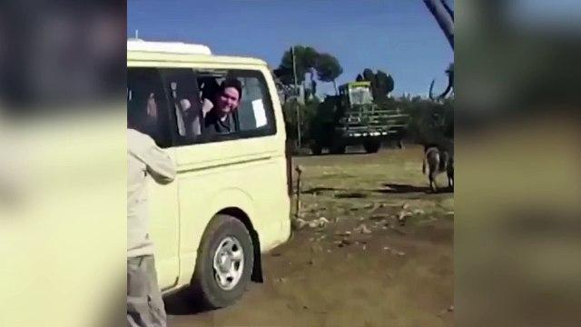 L'idée à la con du mercredi : passer sa tête à l'extérieur du véhicule