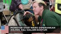 Anjing dalam kostum memainkan monster di film 'Solo' Star Wars - TomoNews