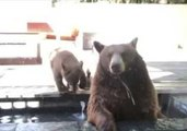 Bear Family Relaxes in California Back Yard While Dog Barks Furiously