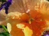 fleurs des 4 saisons