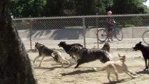 Un écureuil courageux fait face à une meute de chiens fous