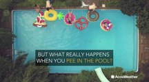 What really happens when you pee in the pool?