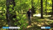 Découverte : l'histoire de l'industrie du bois dans la forêt des Vosges