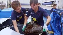 JUST KEEP SWIMMING: Rescue turtles Hawke and Louie are released into Singapore waters.(Video: Resorts World Sentosa)