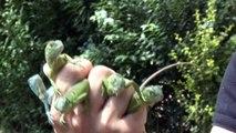 Bursa Hayvanat Bahçesi'nde sevimli iguana yavruları dünyaya geldi
