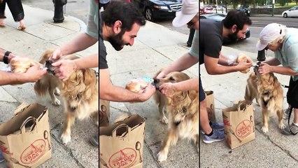 Un chien qui rentre des courses