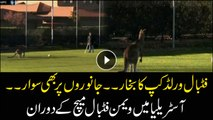 Kangaroo invades pitch at football match in Canberra