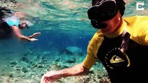 Ce plongeur nage entouré des centaines de méduses