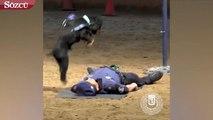 Polis köpeğinden kalp masajı