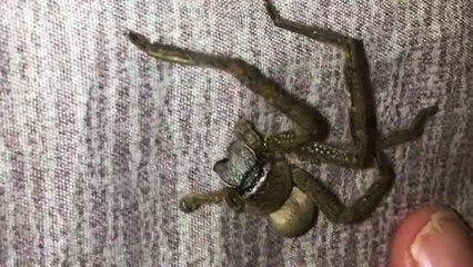 Une araignée à 4 pattes