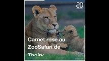 Carnet rose au ZooSafari de Thoiry