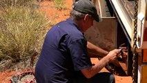 Australie  Les Rugissants du Bush - Documentaire
