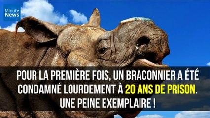 Afrique du Sud : Un braconnier de rhinocéros lourdement condamné