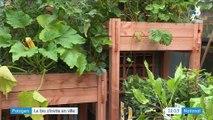 Jardinage : les potagers s'invitent en ville