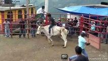Jaripeo Extremo Ranchero Con Jinetes Montando Toros Salvajes De La Mejor Ganaderia
