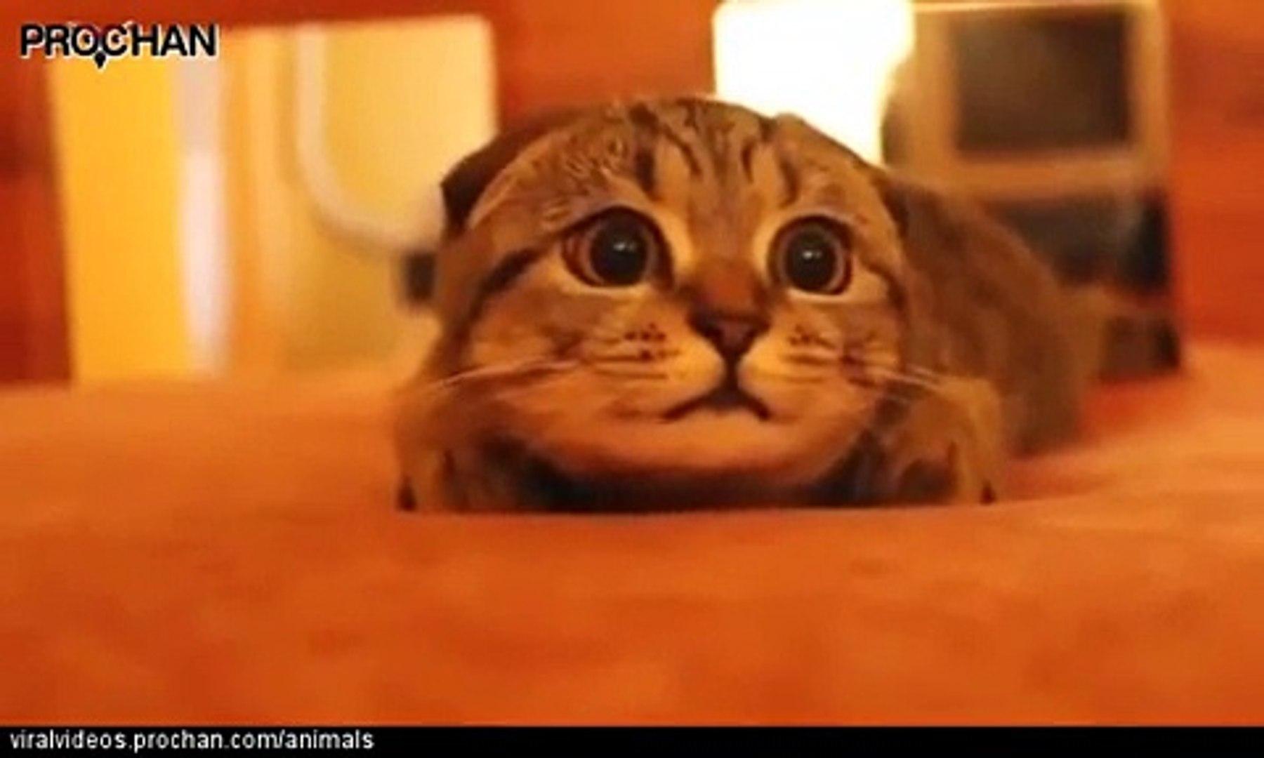 فيديو مضحك لقطة تشعر بالخوف أثناء مشاهدة فيلم رعب