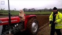 فيديو: كلب أليف يتمتع بمهارة مدهشة.. يمكنه قي
