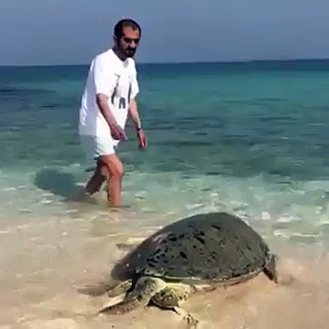 بالفيديو: حاكم دبي يلعب مع سلحفاة على الشاطئ في دبي