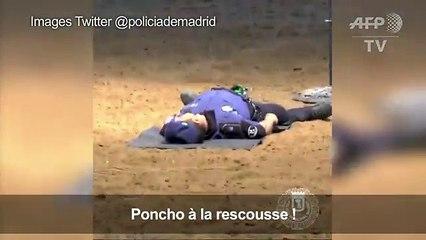 Voici Poncho, le premier chien à vous prodiguer un massage cardiaque