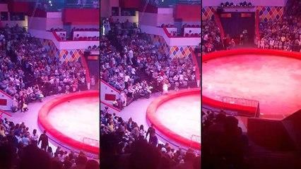 Une autruche dans un cirque russe