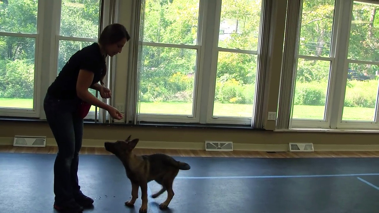 How to Train a Puppy to Sit (k9-1.com)
