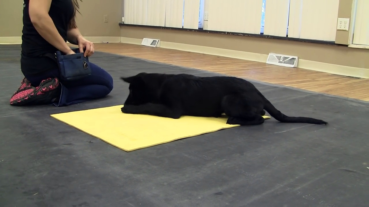 How to Train a Puppy to Go to a Place Mat K9-1.com