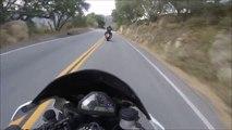 Ces motards roulent à toute vitesse sur une route de montagne en Harley davidson