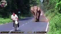 Ce cycliste a eu la peur de sa vie en se faisant pourchasser par un éléphant en colère