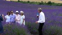 Alpes-de-Haute-Provence :  Des chinois mais aussi des Américains sur le plateau de Valensole