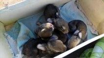 Cute Baby Bunnies 1 Week Old Amazing Little Babies Rabbits Video