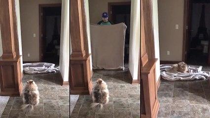 Un chien assiste à un tour de magie