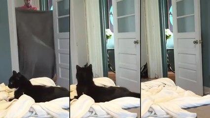 Un chat assiste à un tour de magie