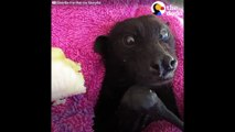 FUNNY ANIMAL VIDEOS Cutest Animals that Will Make You Laugh The Dodo BEST OF