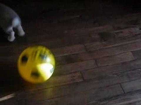 Lapin footballeur 3