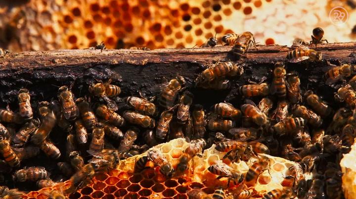 How Burt's Bees Lip Balm Is Made