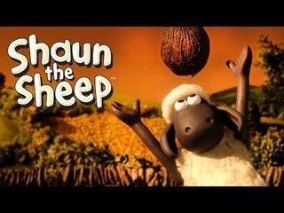 The Coconut - Shaun the Sheep