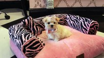 Puppy Playtime View Our Adorable Puppies - Puppy Boutique Store