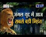 जंगल युद्ध: शेरनी की घात पर शेर ने किया शिकार