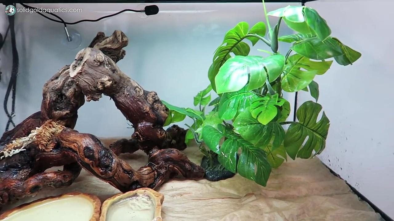New Baby Tree Frog
