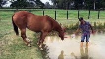 Cute And funny horse Videos Compilation cute moment of the horses - Soo Cute! #33